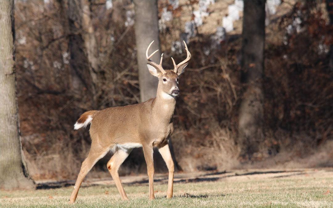 Sawhorse Advisory – Tree Stand Hunting